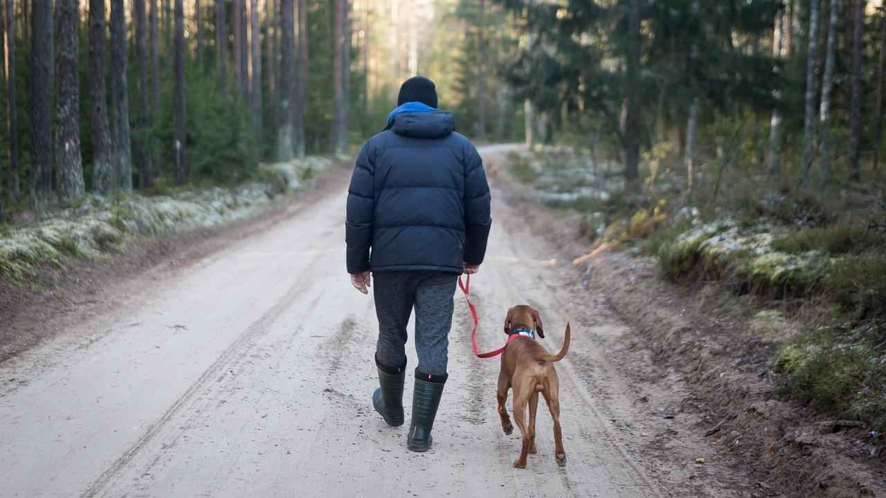 trousse de premiers secours pour votre chien